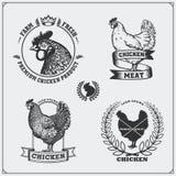 Coleção de etiquetas da carne da galinha, de crachás, de emblemas e de elementos do projeto Imagens de Stock Royalty Free