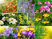Coleção de flores diferentes Foto de Stock