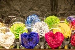 Coleção de flores diferentes da cor fotografia de stock