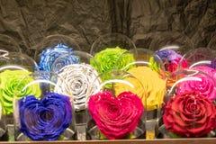Coleção de flores diferentes da cor fotografia de stock royalty free