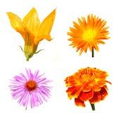 Coleção de flores do outono Foto de Stock Royalty Free