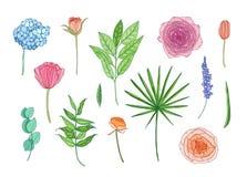 Coleção de flores e das folhas bonitas do jardim - o hortensia, ranúnculo, aumentou, alfazema, eucalipto Jogo de decorativo ilustração stock