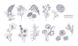 A coleção de flores floristic lindos e da florescência selvagem planta a mão tirada com linhas de contorno pretas no branco ilustração stock