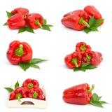 Coleção de frutas da pimenta Imagem de Stock