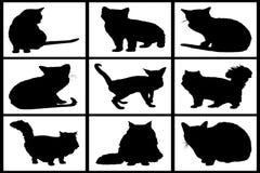 Coleção de gatos pretos Fotografia de Stock Royalty Free