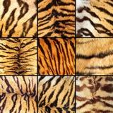 Coleção de listras do tigre Imagem de Stock