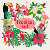 Coleção de pássaros, de folhas de palmeira e de flores tropicais Fotografia de Stock Royalty Free