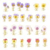 Coleção de pansy hand-drawn Imagem de Stock Royalty Free