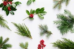 Coleção de plantas decorativas do Natal com folhas do verde e foto de stock royalty free