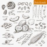 Coleção de porcas e de sementes isoladas Imagens de Stock Royalty Free
