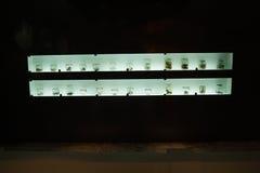 Coleção de répteis e dos ossos preservados em Musium Imagens de Stock