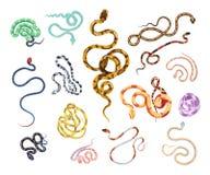 Coleção de serpentes bonitas do vários tipo, tamanho, teste padrão da pele e cor isolados no fundo branco Pacote de ilustração royalty free