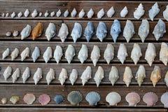 Coleção de Shell foto de stock
