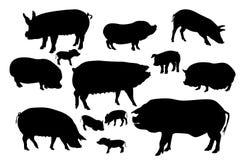 Coleção de silhuetas dos porcos e dos varrões Foto de Stock