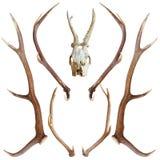 Coleção de troféus da caça Imagem de Stock Royalty Free