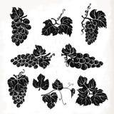 Coleção de uvas, de folhas e de ramos da silhueta Ilustração do vetor ilustração stock