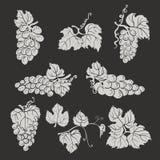 Coleção de uvas, de folhas e de ramos da silhueta no fundo escuro ilustração stock