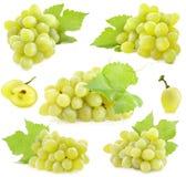 Coleção de uvas maduras imagem de stock