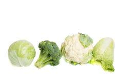 Coleção de variedades diferentes de repolho Imagem de Stock