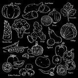 Coleção de vegetais desenhados à mão e de especiarias Fotos de Stock Royalty Free