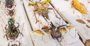 Coleção de vespas e de insetos da borboleta do besouro no general fotos de stock