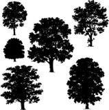 Coleção de vetores da árvore Fotografia de Stock