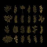 Coleção decorativa rústica das plantas Elementos tirados mão do projeto do vetor ilustração stock