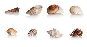 A coleção descasca moluscos marinhos Fotos de Stock Royalty Free