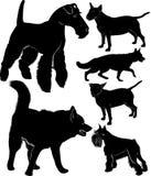 Coleção do cão ilustração royalty free