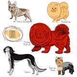 Coleção do cão ilustração stock