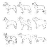Coleção do cão das raças na linha ilustração do vetor