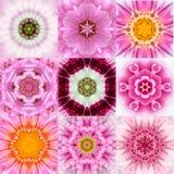 Coleção do caleidoscópio concêntrico cor-de-rosa de nove mandalas da flor Imagens de Stock Royalty Free
