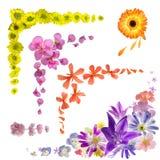Coleção do canto da flor em botão foto de stock