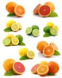 Coleção do citrino fotografia de stock