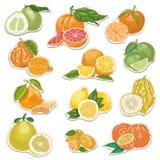 Coleção do citrino em etiquetas ilustração royalty free