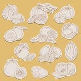 Coleção do citrino em etiquetas no estilo do esboço ilustração stock