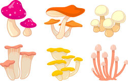 Coleção do cogumelo Imagem de Stock