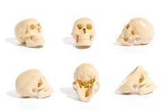 Coleção do crânio Imagem de Stock