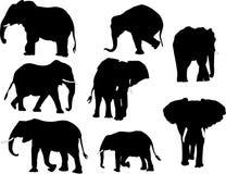 Coleção do elefante Fotografia de Stock
