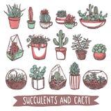 Coleção do esboço das plantas carnudas e dos cactos Fotos de Stock Royalty Free