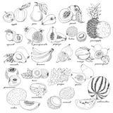 Coleção do fruto no estilo do esboço ilustração do vetor