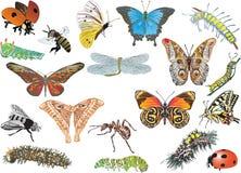 Coleção do inseto da cor no branco Imagem de Stock Royalty Free