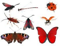 Coleção do inseto da cor vermelha isolada no branco Foto de Stock Royalty Free
