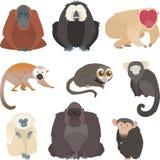 Coleção do macaco e do primata Fotografia de Stock Royalty Free