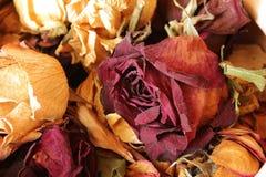 Coleção do marido secado do presente das rosas Fotos de Stock Royalty Free