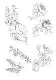 Coleção do outono das filiais, folhas, bagas Fotografia de Stock
