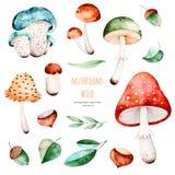 Coleção do outono de Olorful com 15 elementos da aquarela ilustração stock