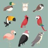Coleção do pássaro Imagens de Stock Royalty Free