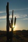 Coleção do por do sol do deserto fotos de stock