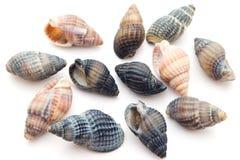 Coleção do Seashell imagem de stock